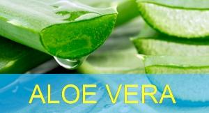 Aloe Vera Canarias - Übersicht